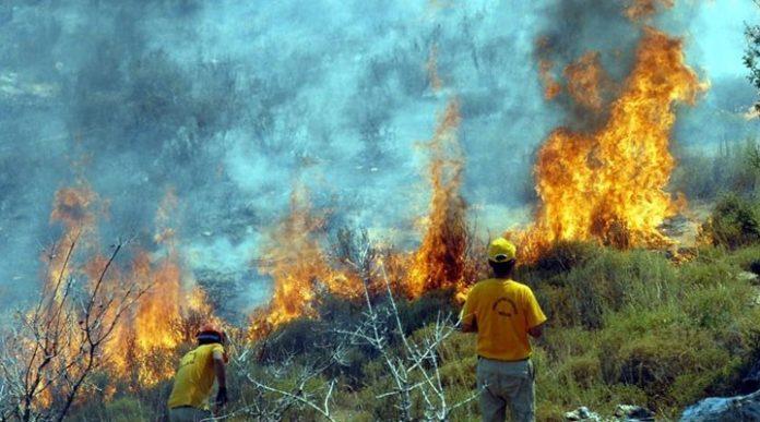 orman yangın